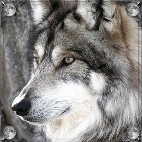 Напала стая волков