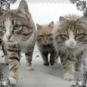 Найти кошек