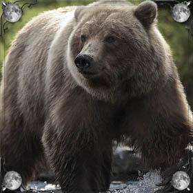 Обнимать медведя