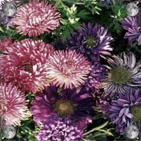 Очень много цветов