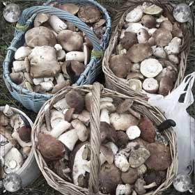 Очень много грибов