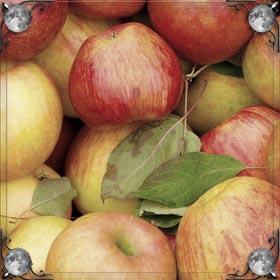 Огромные яблоки