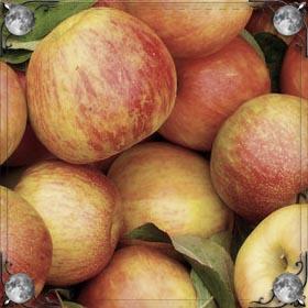 Огромные красные яблоки