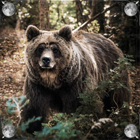 Огромный бурый медведь