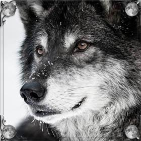 Окружили волки