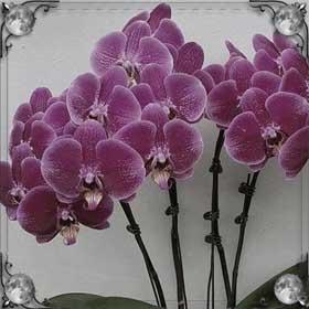 Посадили орхидеи