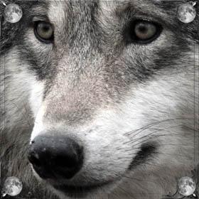 Отбиваться от волка