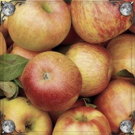 Падают яблоки