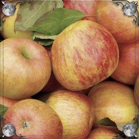 Пакет яблок