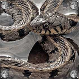 Плавала змея