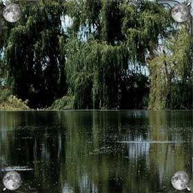 Плавать в пруду