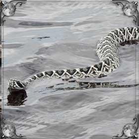 Плывущая змея