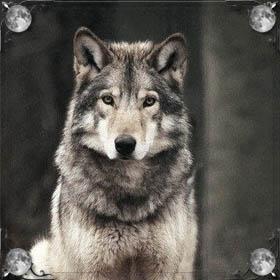 Поймать волка