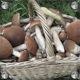 Покупать грибы