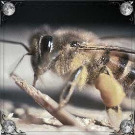Покусали пчелы