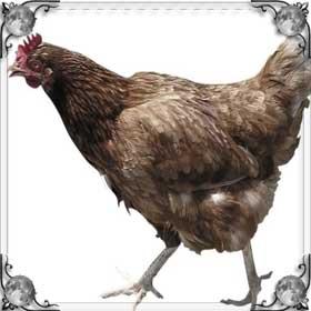 Поймать курицу