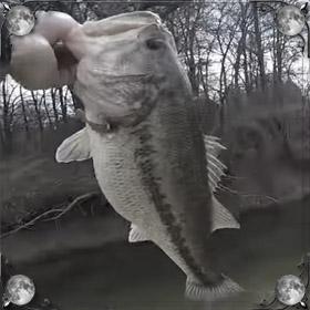 Поймать рыбу