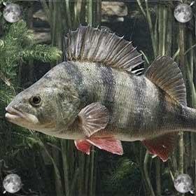 Поймать живую рыбу
