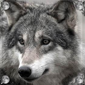 Преследует волк