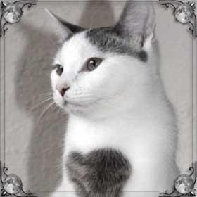 Превратиться в кошку