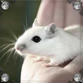 Превратиться в мышь