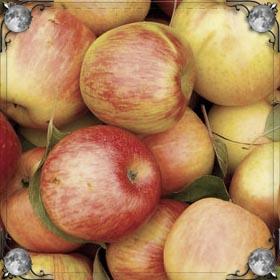 Продавать яблоки