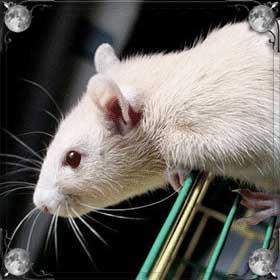 Прогнать крыс
