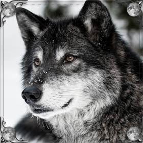 Прогнать волка