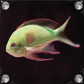 Протухшая рыба