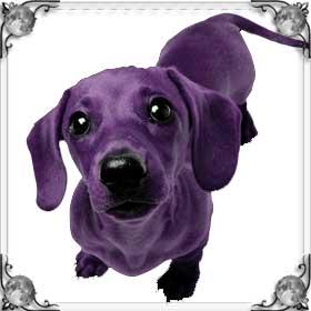 Пурпурная собака