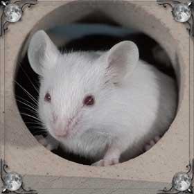 Раздавить мышь