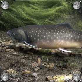 Речка с рыбой