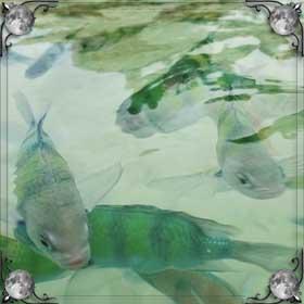 Река с рыбами