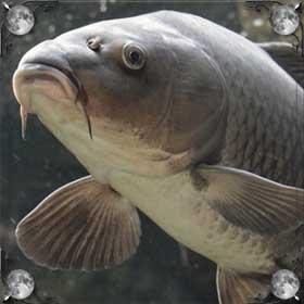 Рыба без головы