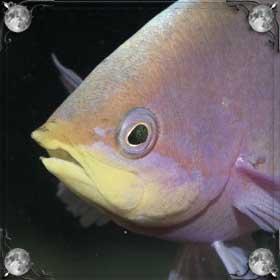Рыба говорит