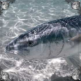 Рыба и рыбалка
