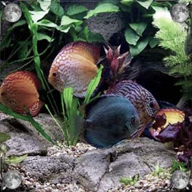 Рыба на суше