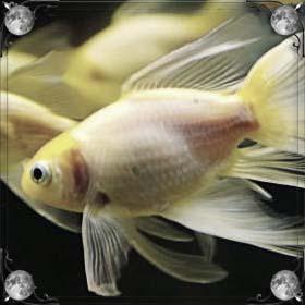 Рыба ожила