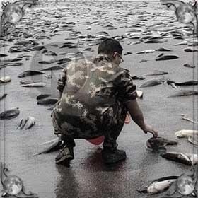 Рыба с неба