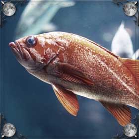 Рыба с червями