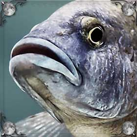 Рыба съела рыбу
