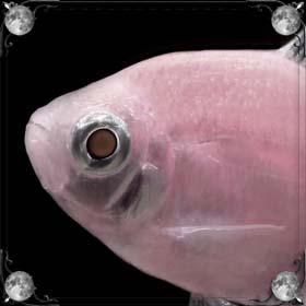 Рыба сорвалась