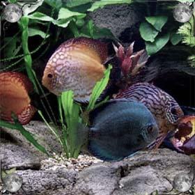 Рыба в доме