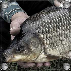 Рыба в грязи