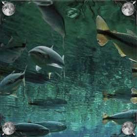 Рыба в речке