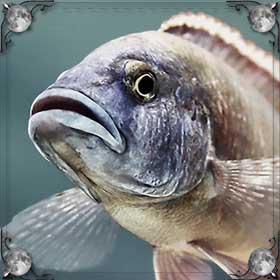 Рыба выпрыгнула
