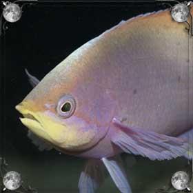 Рыба во рту
