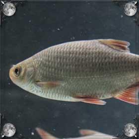 Рыбы в бассейне