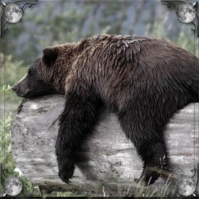 Ручной медведь
