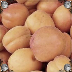 Рвать абрикосы